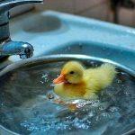 «Киевтеплоэнерго» сообщает про тарифы на горячую воду за март 2019 года