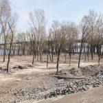 В Киеве проведут ремонт 13 парков
