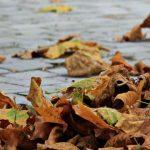 Киев построит комплекс по переработке опавших листьев