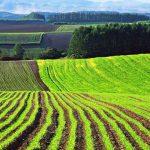 Фермерам подсказали, как сохранить землю