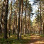 В Киеве создадут рекреационные зоны