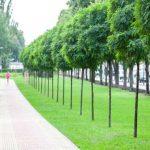 За 20 лет площадь зеленых зон в Киеве вырастет на 662 га