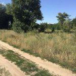 35 га лесов под Киевом не вернули