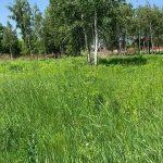 Суд не дал застроить луга в Конча-Заспе