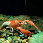 Панцирь омара заложил основы новых видов 3D-печати