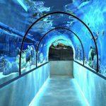 В Харьковском зоопарке построят океанариум