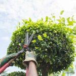 В Киеве обновляют правила по уходу за деревьями